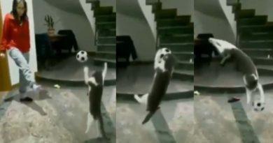 best goal keeper cat
