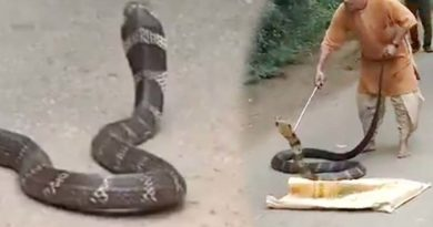 king cobra found near isha yoga centre