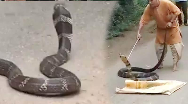 king cobra found near isha yoga centre