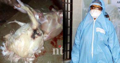 coronavirus-chicken-prices-go-high-after-rumours